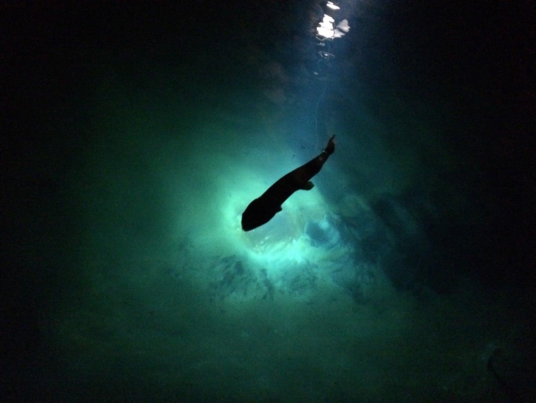 Fisch, in unterirdischem See